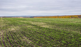 Τοπίο στους ουκρανικούς τομείς Στοκ φωτογραφία με δικαίωμα ελεύθερης χρήσης