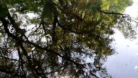 Τοπίο στο δέλτα Δούναβη, Ρουμανία - βιντεοσκοπημένες εικόνες απόθεμα βίντεο