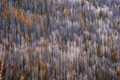 Τοπίο στο δύσκολο εθνικό πάρκο βουνών Στοκ εικόνες με δικαίωμα ελεύθερης χρήσης