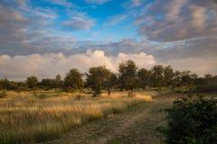 Τοπίο στο kruger-εθνικός-πάρκο στοκ εικόνες με δικαίωμα ελεύθερης χρήσης