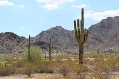 Τοπίο της Αριζόνα με τον κάκτο Saguaro Στοκ φωτογραφία με δικαίωμα ελεύθερης χρήσης