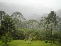 Τοπίο της Βραζιλίας καιρικών τροπικών δασών Στοκ Εικόνες