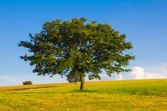 Τοπίο της θερινής Ουμβρίας με τις απομονωμένες σφαίρες δέντρων και σανού Στοκ φωτογραφίες με δικαίωμα ελεύθερης χρήσης