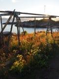Τοπίο της λιμενικής Νορβηγίας Άσπρο βόρειο καλοκαίρι nigts Στοκ Εικόνα