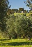 Τοπίο της Ιταλίας: Επαρχία Apulia, Valle d& x27 Itria Στοκ εικόνες με δικαίωμα ελεύθερης χρήσης