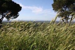τοπίο της Ιταλίας Στοκ φωτογραφία με δικαίωμα ελεύθερης χρήσης