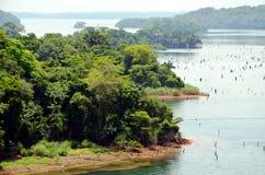 Τοπίο της λίμνης Gatun στοκ φωτογραφία