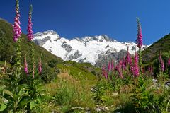 Τοπίο της Νέας Ζηλανδίας στοκ εικόνα με δικαίωμα ελεύθερης χρήσης