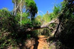 Τοπίο της ξηράς δασικής επιφύλαξης σε Ankarana, Μαδαγασκάρη Στοκ φωτογραφίες με δικαίωμα ελεύθερης χρήσης