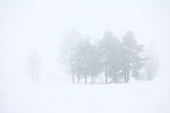 Χειμερινό δάσος σε μια ομίχλη Στοκ Εικόνες