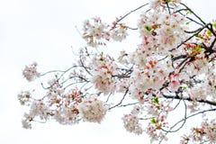 Τοπίο της πόλης του Φουκουόκα στην Ιαπωνία Στοκ εικόνα με δικαίωμα ελεύθερης χρήσης