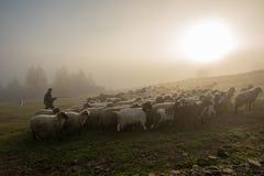 Τοπίο της Ρουμανίας με τα πρόβατα και την αίγα στο χρόνο φθινοπώρου στο αγρόκτημα στοκ εικόνα με δικαίωμα ελεύθερης χρήσης