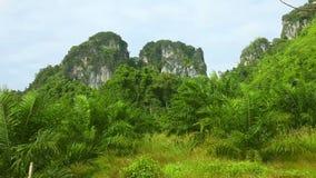 Τοπίο της Ταϊλάνδης. απόθεμα βίντεο