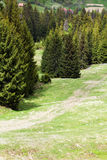 Τοπίο της χλοώδους κοιλάδας με το μονοπάτι και σειρά του πράσινου έλατο-TR Στοκ εικόνα με δικαίωμα ελεύθερης χρήσης