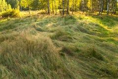 Τοπίο τομέων λιβαδιών με την πολύβλαστη χλόη Στοκ Εικόνες