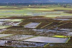 Τοπίο τομέων ρυζιού κοντά σε Antsirabe Στοκ Φωτογραφίες