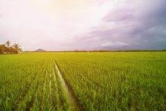 Τοπίο τομέων ρυζιού, τοπίο τομέων ορυζώνα στοκ φωτογραφίες με δικαίωμα ελεύθερης χρήσης