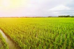 Τοπίο τομέων ρυζιού, τοπίο τομέων ορυζώνα στοκ εικόνα με δικαίωμα ελεύθερης χρήσης