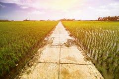 Τοπίο τομέων ρυζιού, τοπίο τομέων ορυζώνα στοκ εικόνα