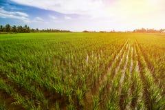 Τοπίο τομέων ρυζιού, τοπίο τομέων ορυζώνα στοκ φωτογραφία με δικαίωμα ελεύθερης χρήσης