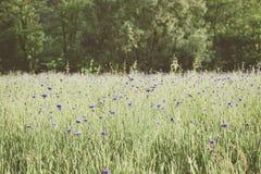 Τοπίο τομέων της Iris στοκ φωτογραφία