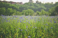 Τοπίο τομέων της Iris στοκ φωτογραφίες