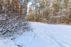 Τοπίο του δάσους χειμερινών πεύκων που καλύπτεται με τον παγετό στο ηλιόλουστο weat Στοκ φωτογραφία με δικαίωμα ελεύθερης χρήσης