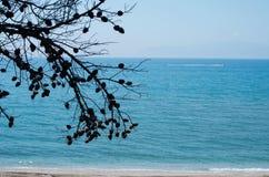 Τοπίο του δέντρου πεύκων κοντά στη θάλασσα Στοκ φωτογραφία με δικαίωμα ελεύθερης χρήσης