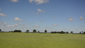 Τοπίο του αγροτικού τομέα και των αυτοκινήτων σίτου γεωργίας στο δρόμο απόθεμα βίντεο