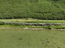 Τοπίο του Θιβέτ Στοκ φωτογραφία με δικαίωμα ελεύθερης χρήσης