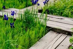 Τοπίο του κήπου της Zen Στοκ Εικόνα