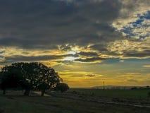 Τοπίο του λιβαδιού στο ηλιοβασίλεμα με τη βαλανιδιά ακροποταμιών και το μπλε ουρανό και τα σύννεφα στην Ισπανία Στοκ Εικόνες