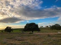 Τοπίο του λιβαδιού στο ηλιοβασίλεμα με τη βαλανιδιά ακροποταμιών και το μπλε ουρανό και τα σύννεφα στην Ισπανία Στοκ φωτογραφία με δικαίωμα ελεύθερης χρήσης