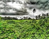 Τοπίο του νεφελώδους ουρανού με τα δέντρα και τους θάμνους στοκ φωτογραφία