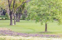 Τοπίο του πάρκου Στοκ φωτογραφίες με δικαίωμα ελεύθερης χρήσης