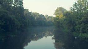 Τοπίο του ποταμού το πρωί παράδεισος φύσης στοιχείων σχεδίου σύνθεσης Ποταμός και θερινό δασικό φως του ήλιου στην κορυφή μεγάλου απόθεμα βίντεο