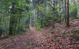 Τοπίο του πράσινου δάσους στη φύση στο φθινόπωρο Όμορφο backgro Στοκ Φωτογραφίες