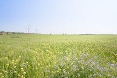 Τοπίο του πράσινου τομέα κριθαριού και των κίτρινων λουλουδιών canola Στοκ Εικόνες