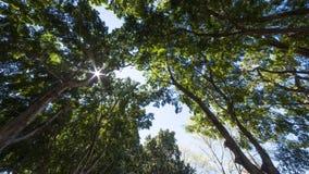 Τοπίο του Σίδνεϊ στοκ φωτογραφίες