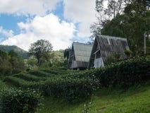 Τοπίο του σπιτιού στη φυτεία τσαγιού στοκ φωτογραφία με δικαίωμα ελεύθερης χρήσης