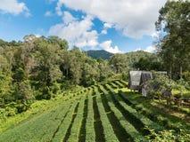 Τοπίο του σπιτιού στη φυτεία τσαγιού στοκ φωτογραφίες