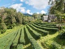 Τοπίο του σπιτιού στη φυτεία τσαγιού στοκ εικόνες