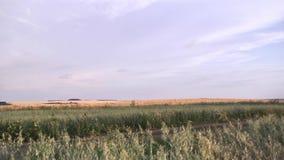 Τοπίο του τεράστιου τομέα που καλύπτεται με την ξηρά πράσινη χλόη από τον γκρίζο ουρανό σκηνή Νεφελώδης ουρανός πέρα από τον αγρο φιλμ μικρού μήκους