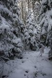 Τοπίο του χιονώδους πυκνού δάσους βουνά Άποψη των χιονισμένων ψηλών έλατων και impassable snowdrifts Στοκ Φωτογραφίες