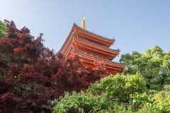 Τοπίο του όμορφου και ζωηρόχρωμου ιαπωνικού ύφους κήπων toc Στοκ Εικόνες