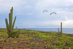 τοπίο του Aruba Στοκ εικόνα με δικαίωμα ελεύθερης χρήσης