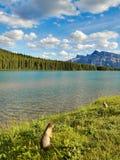 Τοπίο του Canadian Rockies λιμνών Στοκ φωτογραφίες με δικαίωμα ελεύθερης χρήσης