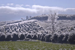 Τοπίο των δέντρων της Holly στη βουνοπλαγιά που καλύπτεται με τα κρύσταλλα πάγου στοκ φωτογραφία