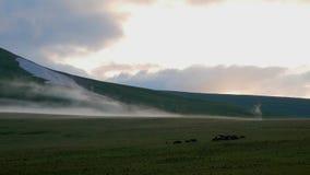 Τοπίο των αλπικών λιβαδιών το βράδυ βόσκοντας άλογα πεδίων απόθεμα βίντεο