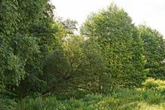 Τοπίο των αποβαλλόμενων δέντρων και της ψηλής χλόης σε ένα λιβάδι Στοκ Εικόνες